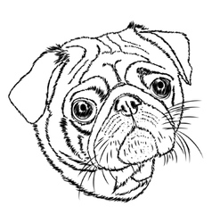Pug linear on a white background vector