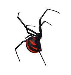 Black Spider vector