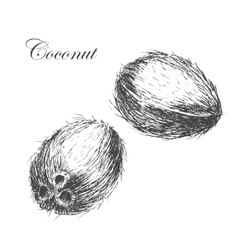 Coconut hand drawn sketch with palm leaf vector