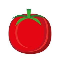 colorful tomato graphic vector image