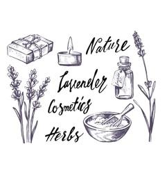 Lavender set vector
