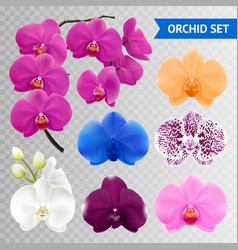 Orchid flowers realistic transparent collection vector