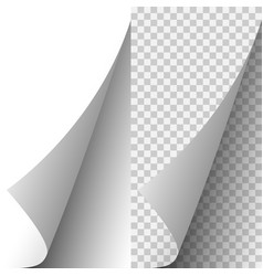 white realistic paper page corner vector image
