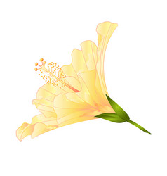 Yellow flower tropical plant hibiscus vector