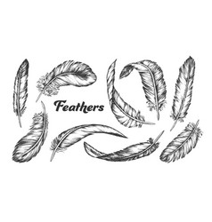 Collection different feathers set ink vector