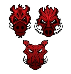 Wild boars with sharp tusks vector image