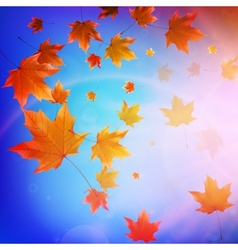 Beautiful autumn Leaves vector image