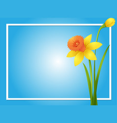 Border template with yellow daffodil vector