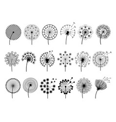 dandelion silhouettes herbal vector image