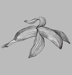 grey fruit-6 vector image