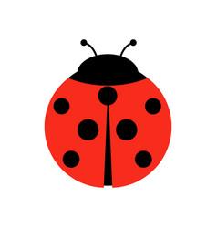 ladybug or ladybird graphic vector image