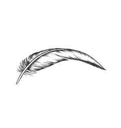lost bird outer element feather vintage vector image