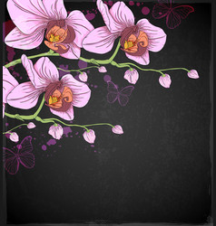 Pink orchids and butterflies vector