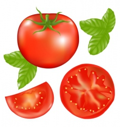 tomato with slices vector image