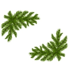 Two green spruce branches realistic Placed in the vector