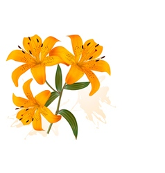 Flower Background With Three Beautiful Lilies vector image vector image
