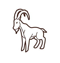 ibex standing graphic vector image