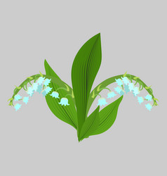 Spring flowers lilies of the valley sketch vector