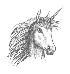 Unicorn horse sketch with horn vector