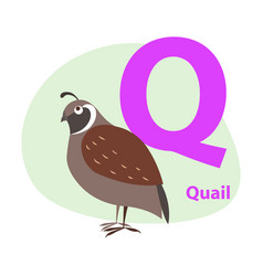 Zoo abc letter with cute quail cartoon vector