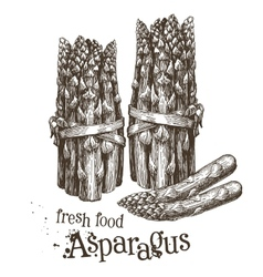 asparagus logo design template fresh vector image