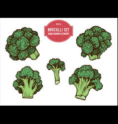 Collection of hand drawn colored brocolli vector