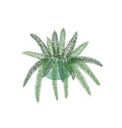 Fern houseplant in stylish ceramic pot flat vector