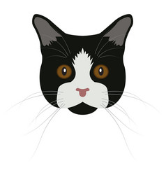 isolated manx cat vector image