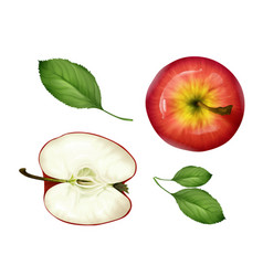 Realistic apple half leaves set top view vector