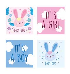 Boy or girl gender reveal cute rabbits flowers vector