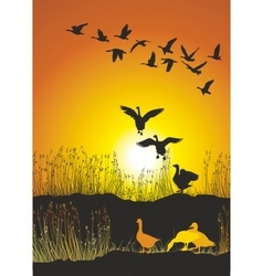 Migrating geese at sunse vector
