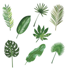 Set leaves tropical plants collection of vector