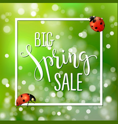 spring sale banner with realistic ladybugs design vector image