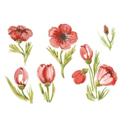 watercolor poppies in different styles vector image