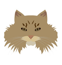 Isolated siberian cat vector