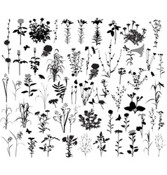 66 silhouettes of flowers and plants vector