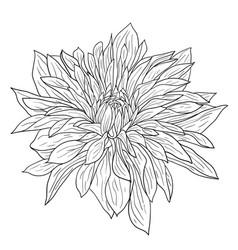 Beautiful monochrome sketch black and white vector
