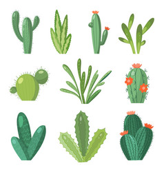 Cartoon cactus set set bright cacti vector