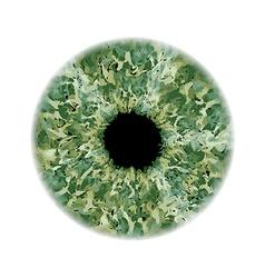 Eye iris vector image