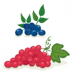 grapes and blueberries vector image