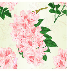 seamless texture flowers light pink rhododendrons vector image