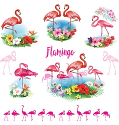 set flamingoes and arrangement from tropical vector image