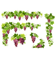 Set of bunches red grapes vector