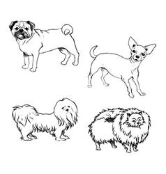 sketch of set dogs for design vector image