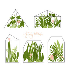 set geometric glass terrariums with tropical vector image