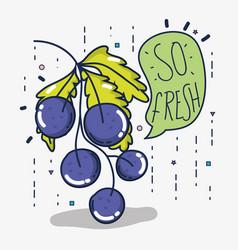 So fresh grapes vector