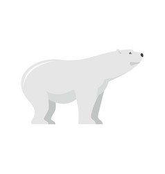 watching of polar bear icon flat style vector image