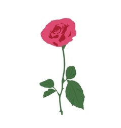 a rose on a white background vector image