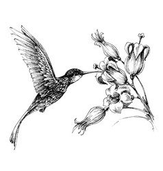 hummingbird in flight drawing vector image
