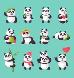 panda bearcat or chinese bear with bamboo vector image vector image